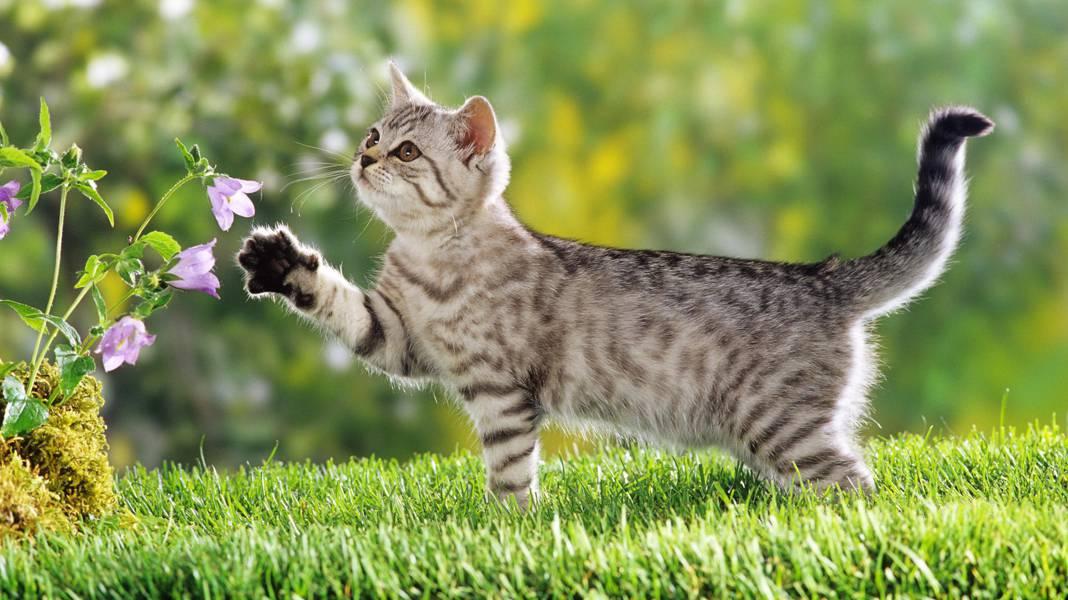 Клещ на кошке: что делать, если кота укусил паразит