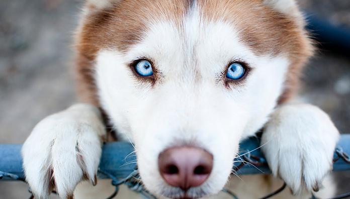 Опасны ли клещи для собак