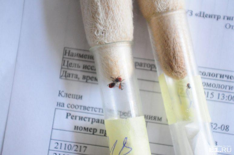 проверка клеща в лаборатории