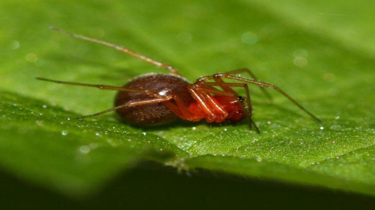 паукообразный клещ